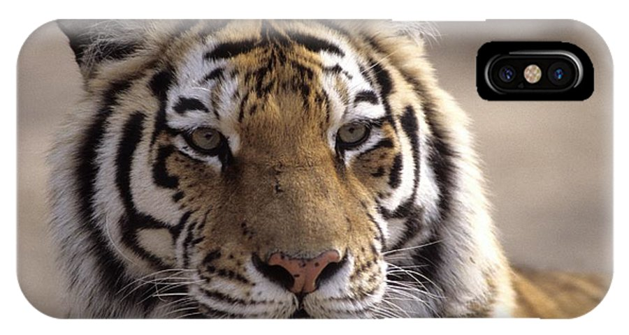 Outdoors IPhone X / XS Case featuring the photograph Tiger, Qinhuangdao Zoo, Hebei Province by Raymond Gehman