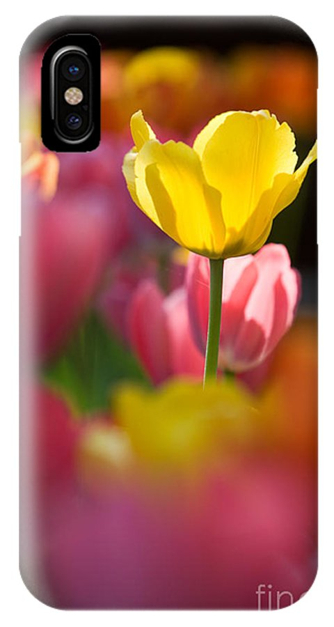 Backdrop IPhone X Case featuring the photograph Tulips by Kati Finell