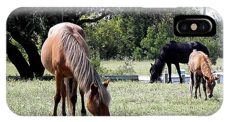 Wild IPhone X Case featuring the photograph Wild Spanish Mustang Foal by Kim Galluzzo Wozniak