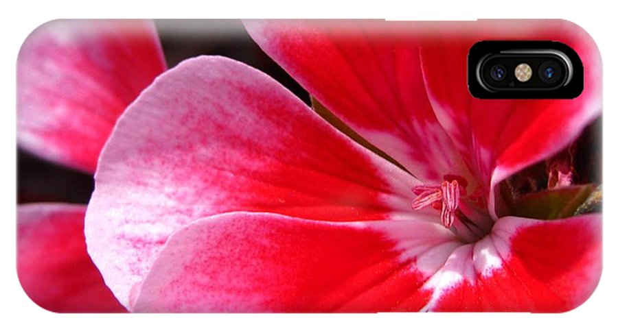 Zonal Geranium IPhone X Case featuring the photograph Zonal Geranium Named Candy Fantasy Kiss by J McCombie