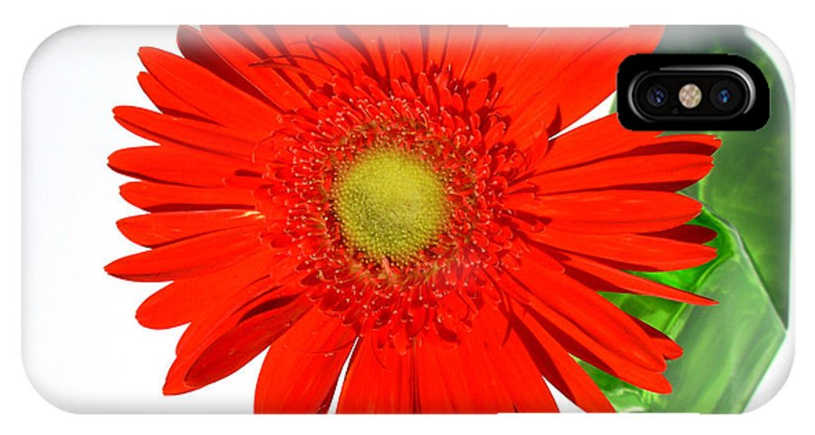 Gerbera Photographs IPhone X Case featuring the photograph 2003a1 by Kimberlie Gerner