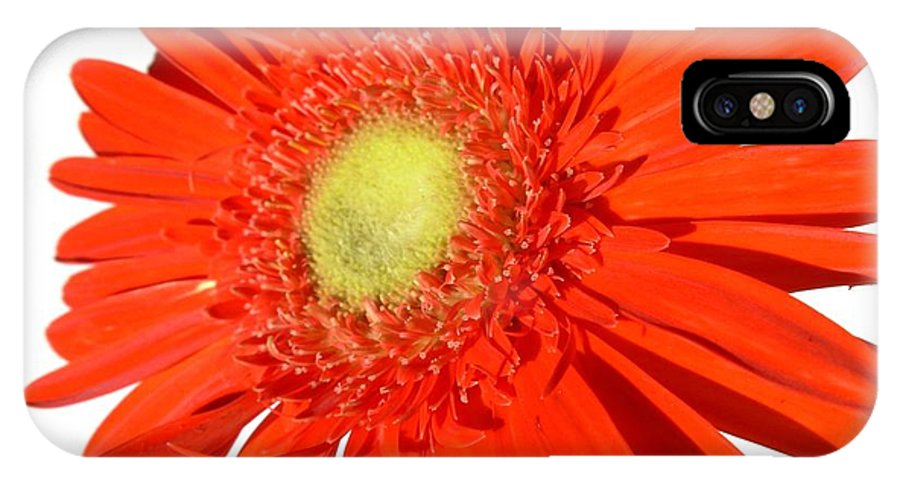 Gerbera Photographs IPhone X Case featuring the photograph 2006a2 by Kimberlie Gerner