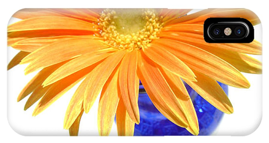 Gerbera Photographs IPhone X Case featuring the photograph 2086a by Kimberlie Gerner