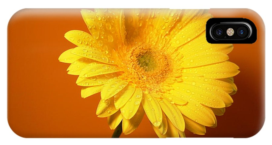 Gerbera Photographs IPhone X Case featuring the photograph 2315 by Kimberlie Gerner