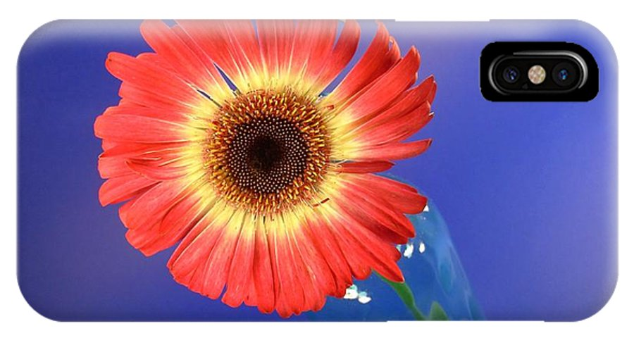 Gerbera Photographs IPhone X Case featuring the photograph 2375c by Kimberlie Gerner