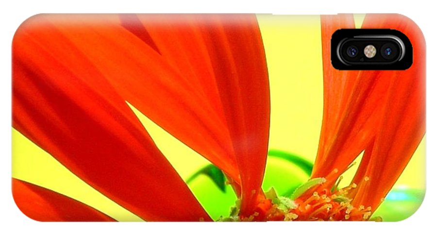 Gerbera Photographs IPhone X Case featuring the photograph 2504c-012 by Kimberlie Gerner