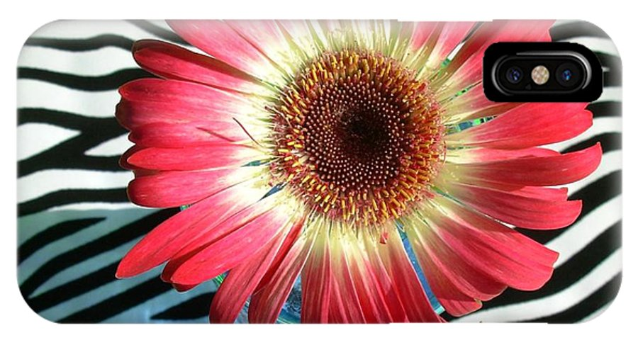 Gerbera Photographs IPhone X Case featuring the photograph 2550c1-024 by Kimberlie Gerner