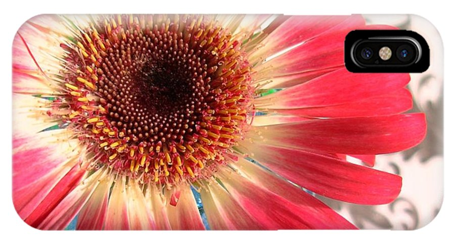 Gerbera Photographs IPhone X Case featuring the photograph 2558c1-009 by Kimberlie Gerner