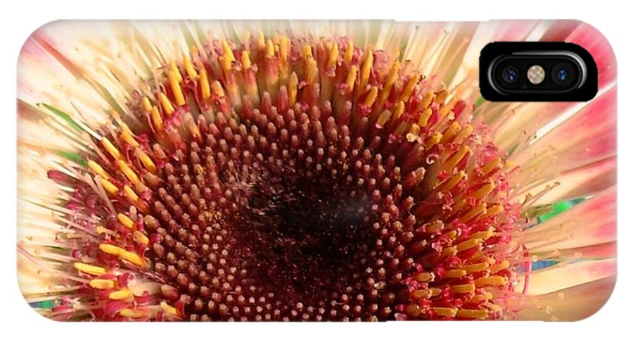 Gerbera Photographs IPhone X Case featuring the photograph 2558c1-017 by Kimberlie Gerner