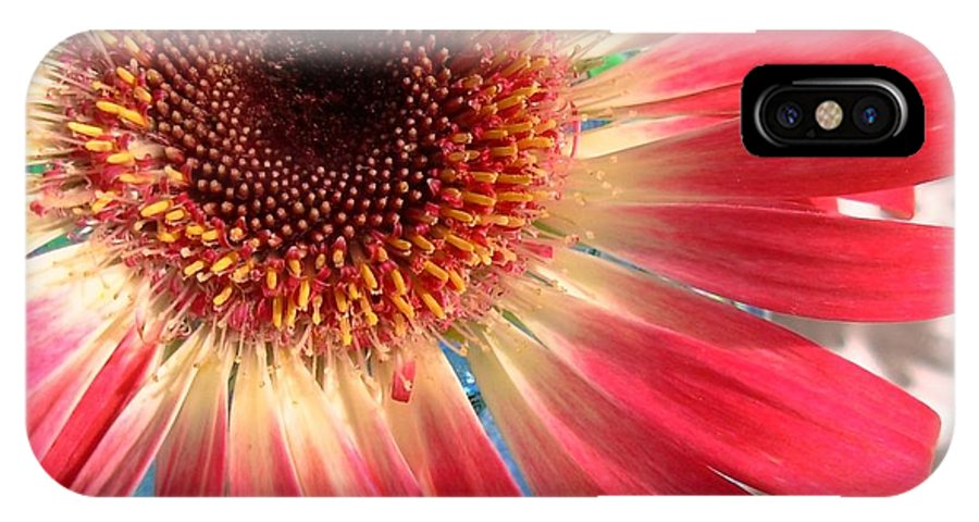 Gerbera Photographs IPhone X Case featuring the photograph 2558c1-022 by Kimberlie Gerner