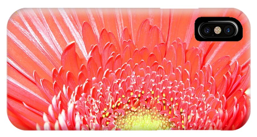Gerbera Photographs IPhone X Case featuring the photograph 2560-001 by Kimberlie Gerner