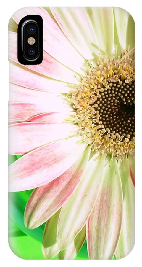 Gerbera Photographs IPhone X Case featuring the photograph 2583c1-007 by Kimberlie Gerner