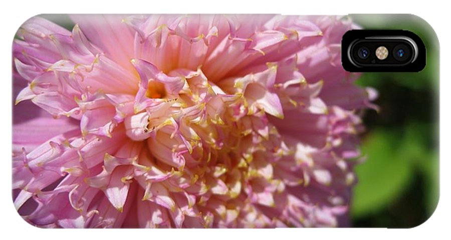 Dahlia IPhone X Case featuring the photograph Dahlia Named Siemen Doorenbosch by J McCombie