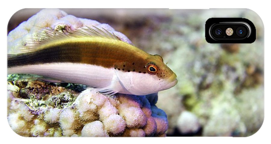 Paracirrhites Forsteri IPhone X / XS Case featuring the photograph Forster Hawkfish by Dimitris Neroulias