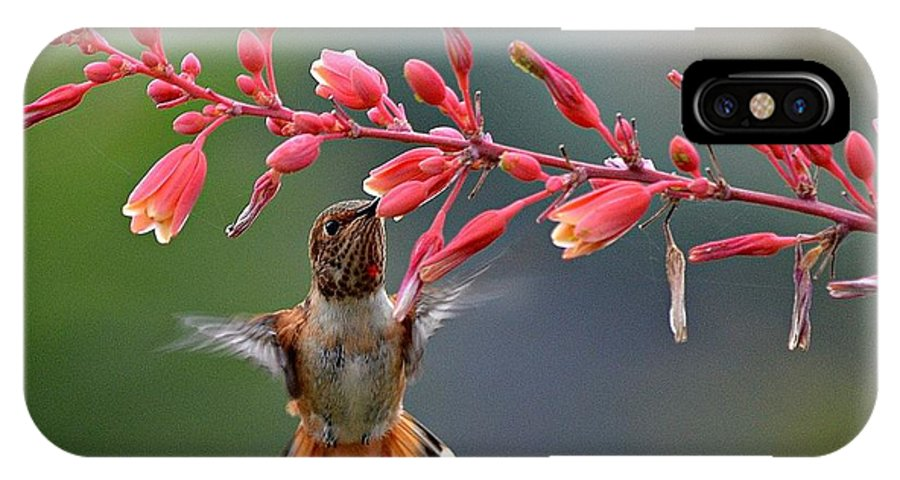 Hummingbird IPhone X Case featuring the photograph Full Frontal by Fraida Gutovich
