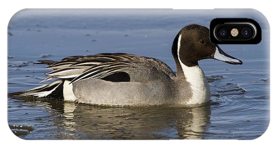 Doug Lloyd IPhone X Case featuring the photograph Northern Pintail by Doug Lloyd