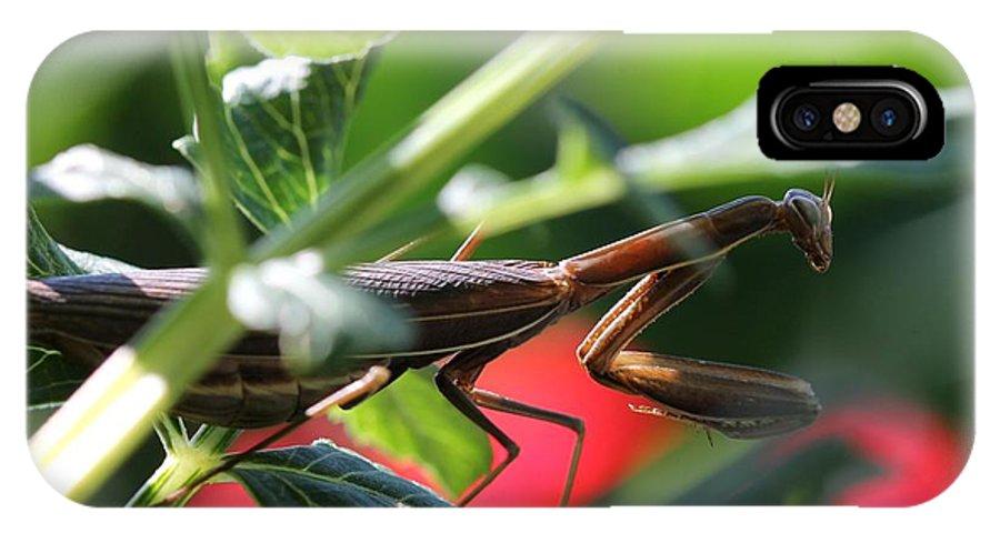 Praying Mantis IPhone X Case featuring the photograph Praying Mantis by J McCombie