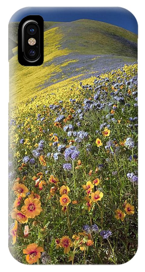 San Joaquin Blazingstar IPhone X / XS Case featuring the photograph Wildflowers, California by Bob Gibbons