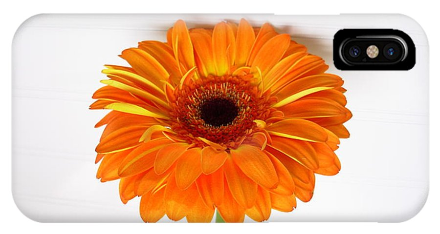 Gerbera Photographs IPhone X Case featuring the photograph 3527 by Kimberlie Gerner