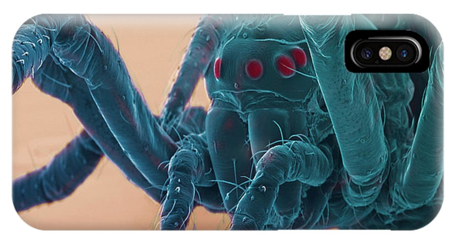 Scanning Electron Micrograph IPhone X / XS Case featuring the photograph Baby Spider, Sem by Steve Gschmeissner
