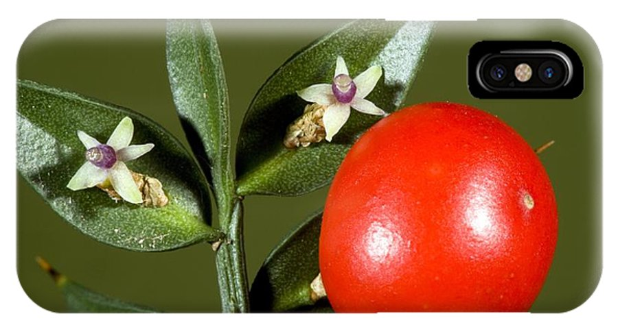 Butcher'ss Broom IPhone X / XS Case featuring the photograph Butcher's Broom (ruscus Aculeatus) by Bob Gibbons
