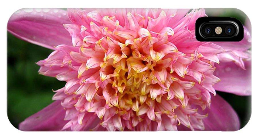 Dahlia IPhone X Case featuring the photograph Dahlia Named Siemen Doorenbosch by J McCombie