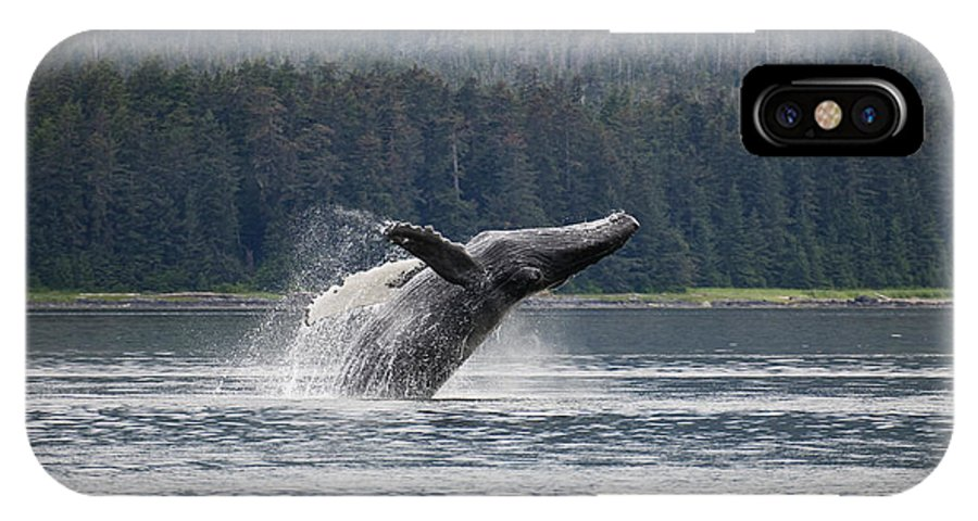 Mp IPhone X Case featuring the photograph Humpback Whale Megaptera Novaeangliae by Konrad Wothe