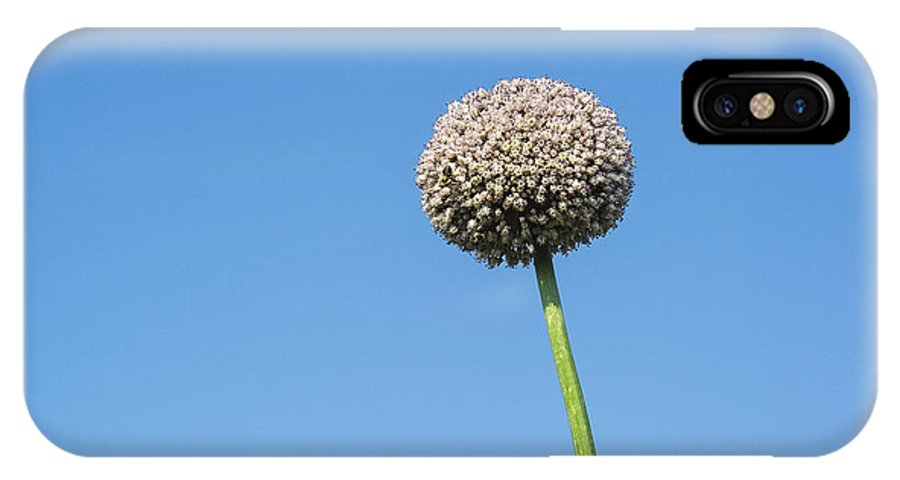 Allium IPhone X / XS Case featuring the photograph Onion Flower by John Greim