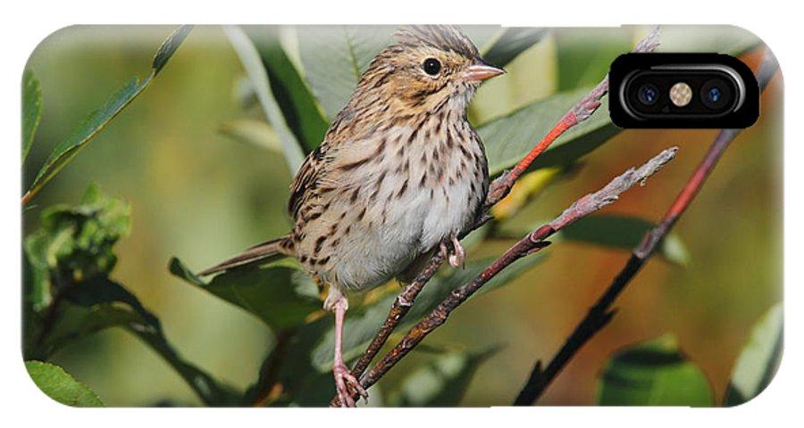 Doug Lloyd IPhone X Case featuring the photograph Savannah Sparrow by Doug Lloyd