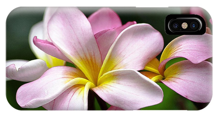 Floral IPhone X Case featuring the photograph Tropical Frangrapani by Karen Lewis