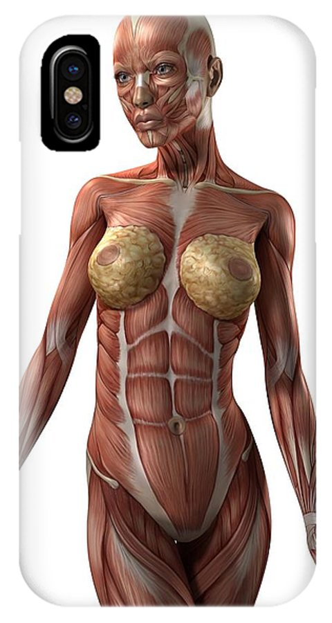 Artwork IPhone X / XS Case featuring the photograph Female Muscles, Artwork by Sciepro