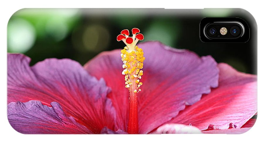 Flower IPhone X Case featuring the photograph Morning Light by Paul Slebodnick