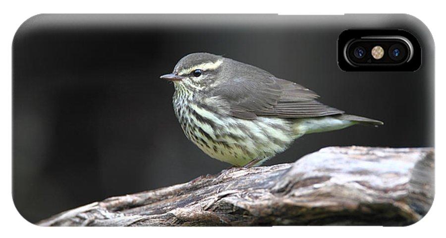 Doug Lloyd IPhone X Case featuring the photograph Northern Waterthrush by Doug Lloyd