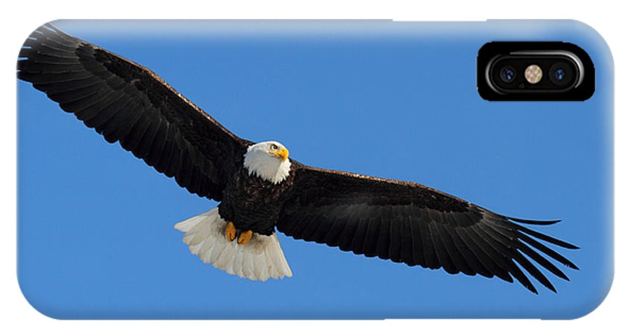 Doug Lloyd IPhone X Case featuring the photograph Searching by Doug Lloyd