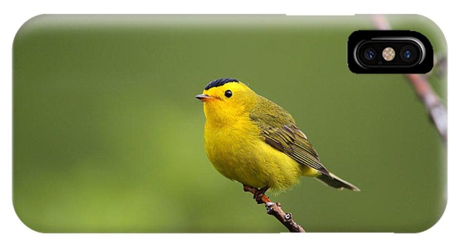 Doug Lloyd IPhone X Case featuring the photograph Wilsons Warbler by Doug Lloyd