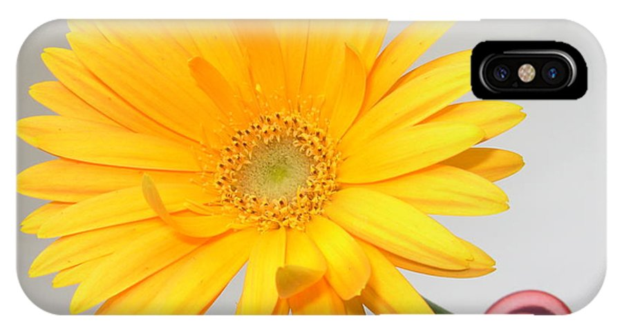 Gerbera Photographs IPhone X Case featuring the photograph 5171.2 by Kimberlie Gerner