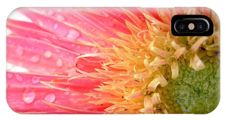 Gerbera Photographs IPhone X Case featuring the photograph 54793c by Kimberlie Gerner