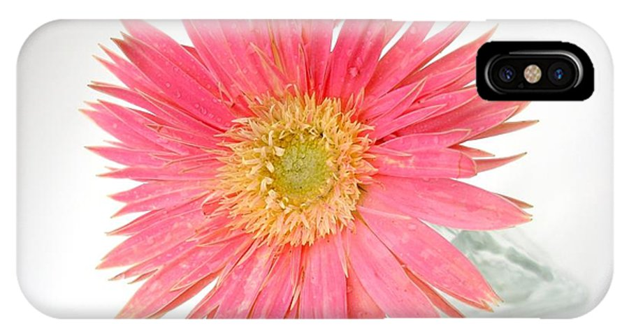 Gerbera Photographs IPhone X Case featuring the photograph 5487c1 by Kimberlie Gerner