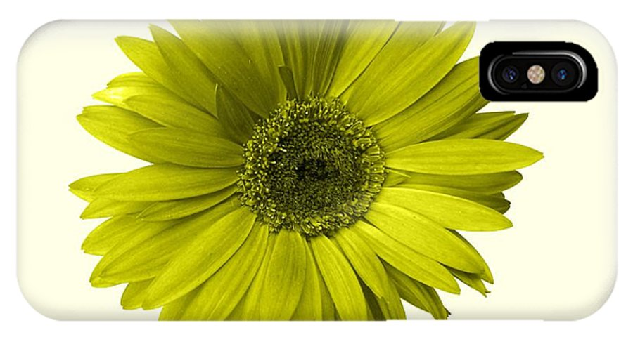 Gerbera Photographs IPhone X Case featuring the photograph 5552c6-004 by Kimberlie Gerner