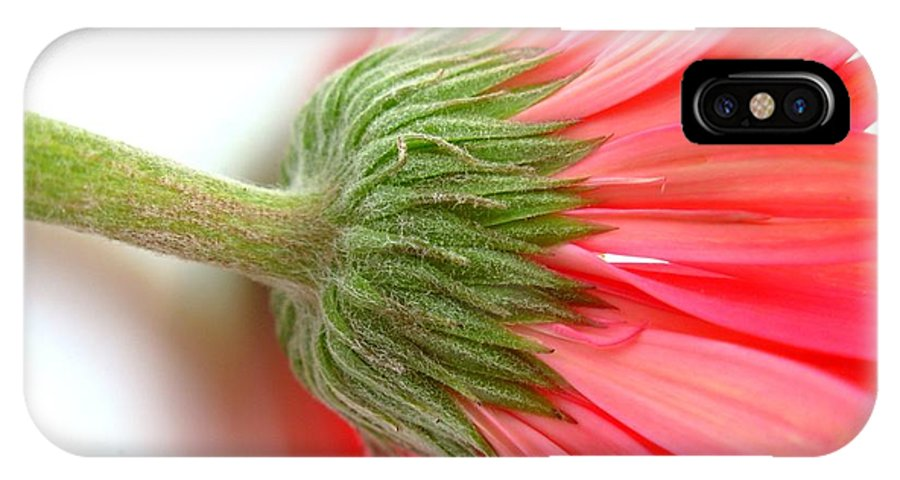 Gerbera Photographs IPhone X Case featuring the photograph 5599c by Kimberlie Gerner