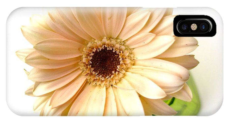 Gerbera Photographs IPhone X Case featuring the photograph 5732c1 by Kimberlie Gerner