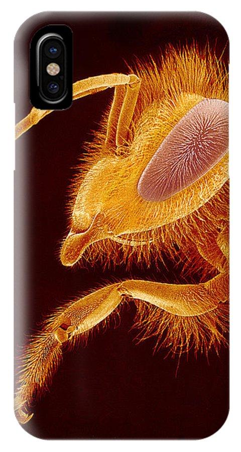 Bee IPhone X / XS Case featuring the photograph Honey Bee, Sem by Susumu Nishinaga