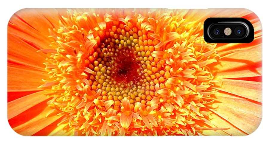 Gerbera Photographs IPhone X Case featuring the photograph 6190-007 by Kimberlie Gerner
