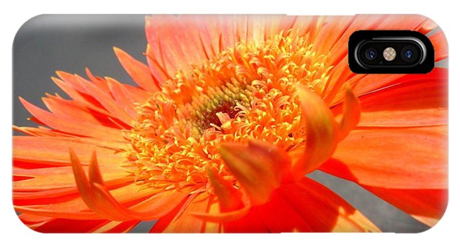 Gerbera Photographs IPhone X Case featuring the photograph 6192-001c by Kimberlie Gerner