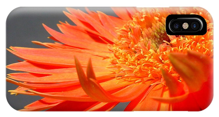 Gerbera Photographs IPhone X Case featuring the photograph 6192-011 by Kimberlie Gerner