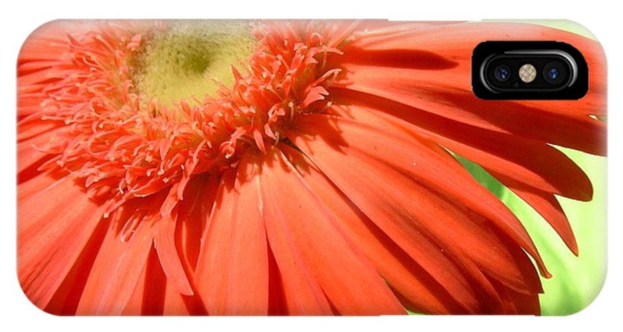 Gerbera Photographs IPhone X Case featuring the photograph 6244c-001 by Kimberlie Gerner