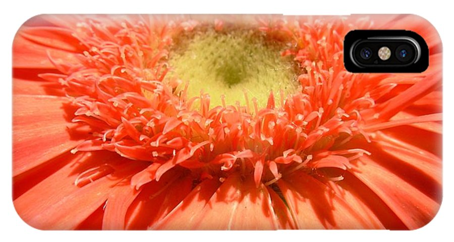 Gerbera Photographs IPhone X Case featuring the photograph 6246c-001 by Kimberlie Gerner
