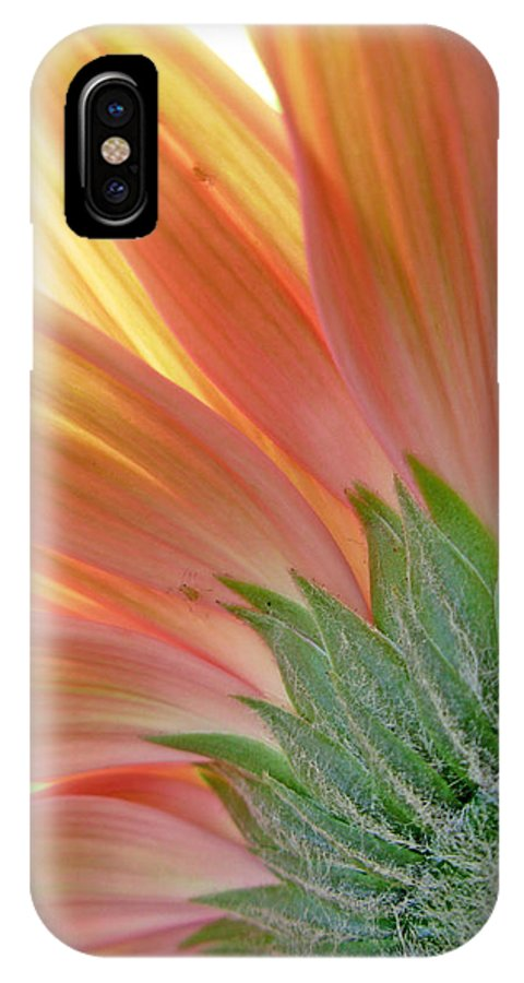 Gerbera Photographs IPhone X Case featuring the photograph 62582 by Kimberlie Gerner