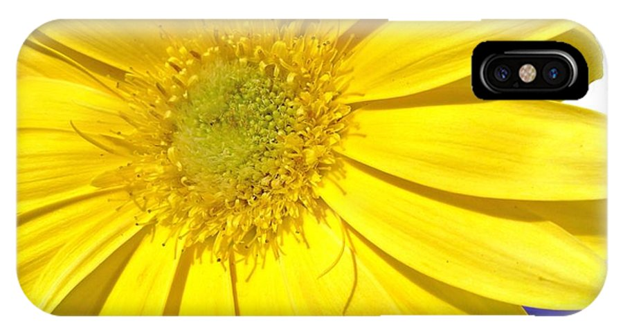 Gerbera Photographs IPhone X Case featuring the photograph 6391c by Kimberlie Gerner