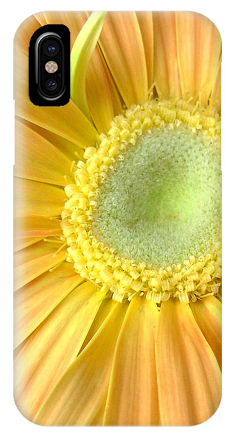 Gerbera Photographs IPhone X Case featuring the photograph 67111a-002 by Kimberlie Gerner